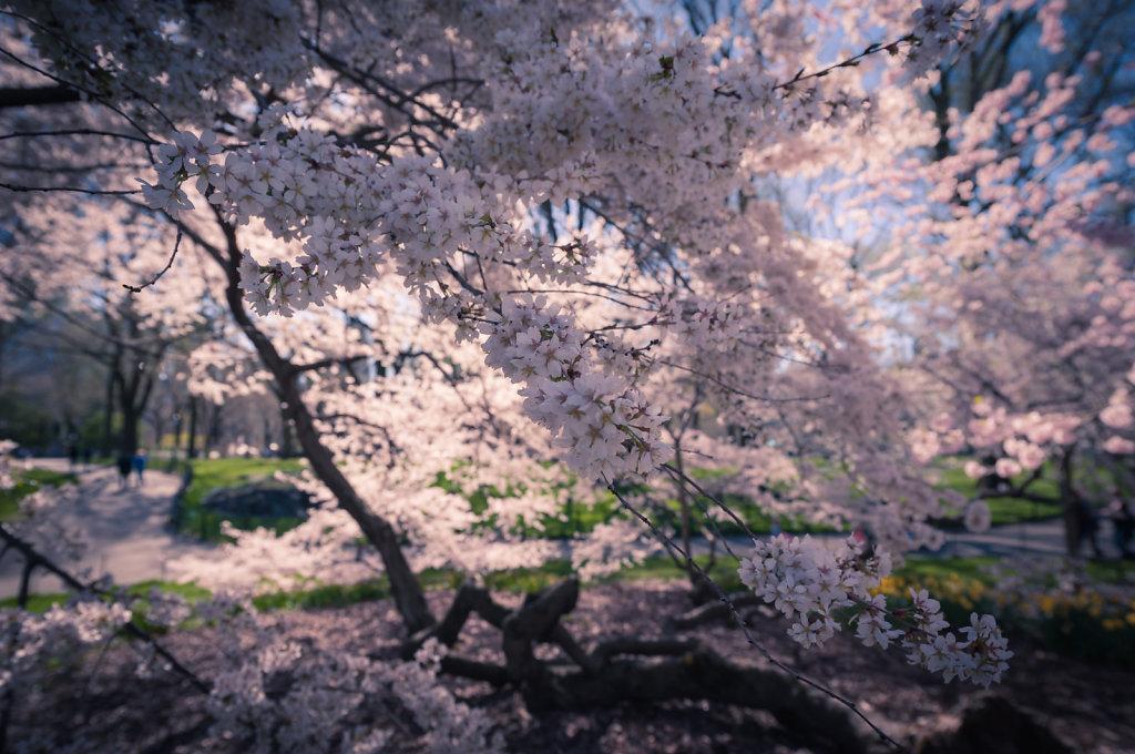 blossoms-2.jpg