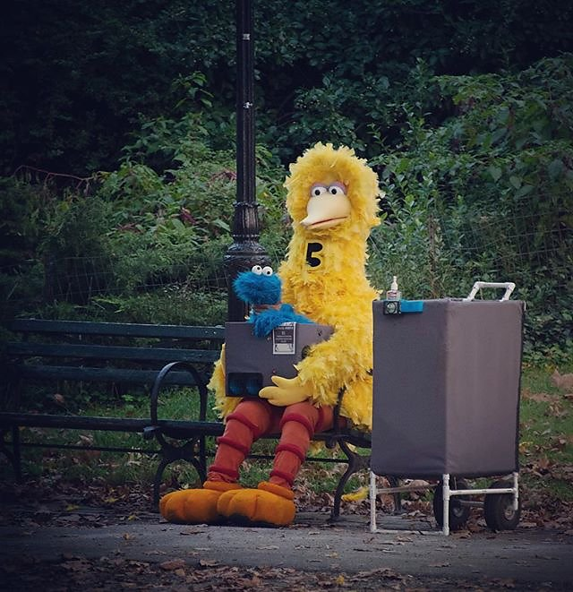 A big bird in Central Park (with a cookie)